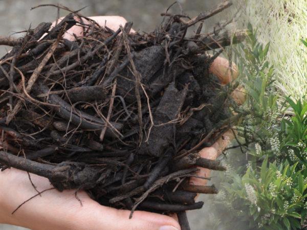 mulch fertilisant