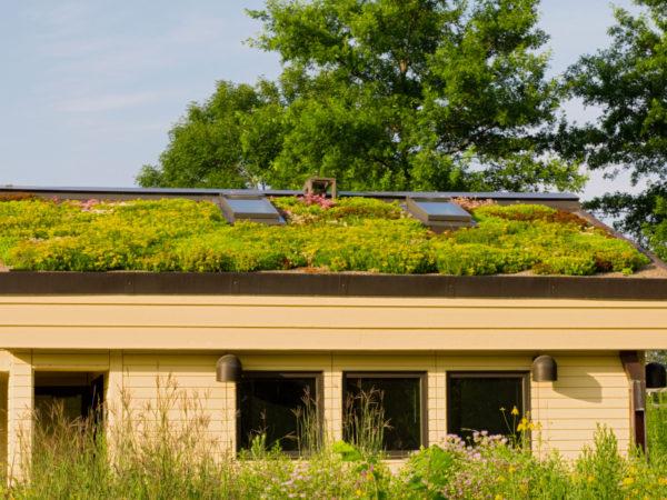 substrat toiture végétalisée